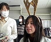 修学旅行に鹿がでた(゚Д゚)
