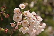 桜・紅葉フォト