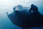 溺れるダイバー