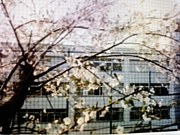 瑞穂農芸高校平成12年卒業生