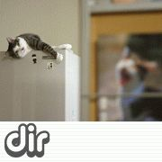 [dir] 猫・ネコ・ねこ
