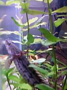 熱帯魚*aqua*