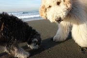 湘南で犬との生活