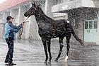 サングレアル(競走馬)