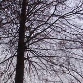 もみの木の下だらだら会