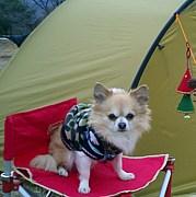女子キャンプ別館 犬部