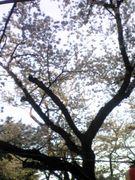 ☆宮城、仙台のいい所☆