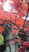 転勤族の妻in京都