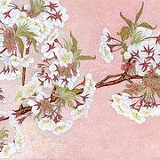 「mit」小出 紫桜里
