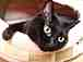 黒ネコ ジュジュ