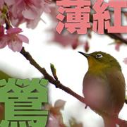日本の色の名前
