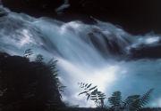 森の幻想写真館