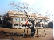 八王子市立第八小学校