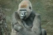 RGの動物園