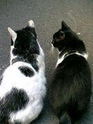 ネコの後ろ姿が好き
