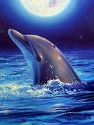 dolphin☆grampus