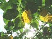 コトバの木霊〜ココロに残る言葉