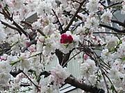 花の命は各々だから!(b^ー°)
