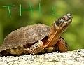 TurtleHead