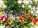 花好きのガーデニング