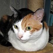 三毛猫ミーコのお部屋