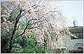 2008年度東京女子大学新入生