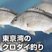 東京湾のクロダイ釣り