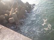 ☆宮城、福島の海釣り☆