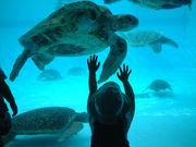 海ガメ保護プロジェクト