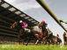 Dream comes Horse Race !!