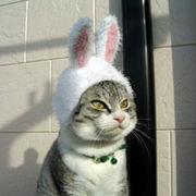 the 猫かぶり