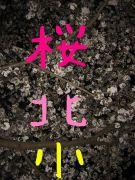 ★桜丘北小★