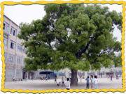 京都市立竹田小学校