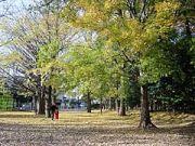 芦花公園で一服