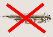 無脊椎動物