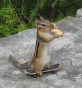 ★和歌山的スケーター★