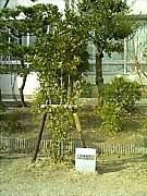 【2003年】東角っ子【卒業】