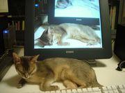 猫とコンピューター