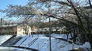 昭和大学 2010年度入学者