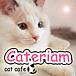 猫カフェ Cateriam
