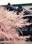 天理教東京教区学生会