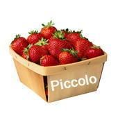 ��������Piccolo