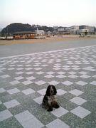 犬☆広島大・みなと公園☆散歩