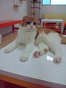 猫カフェNYAON♪福岡