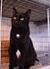 黒猫が大好き♪