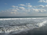 海に帰りたい
