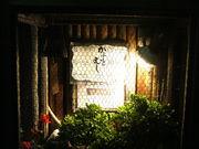 BARかぶとむし 宮崎県