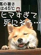 ◆ヒマ部◆