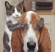 犬ぬこで癒されたい