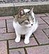同志社の猫